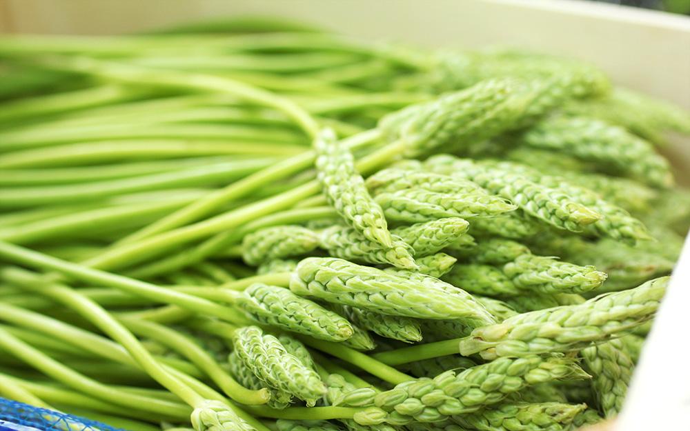 ヨーロッパの春を告げる貴重な食材、フランス産「アルパラソパージュ(アスパラソバージュ)」